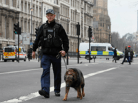 A police dog handler patrols on a road near the Houses of Parliament in London, Thursday March 23, 2017 on her way to the House of Parliament.