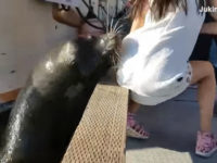 VIDEO: Sea Lion Pulls Girl from Pier, Drags Her Underwater