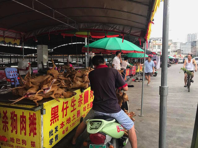 Yulin Dog Meat Festival, China