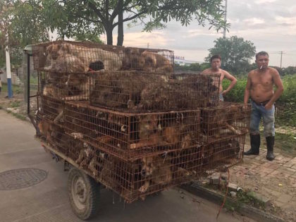 Celebrity Protests of China's Yulin Dog Meat Festival Plummet After False Cancelation Rumors