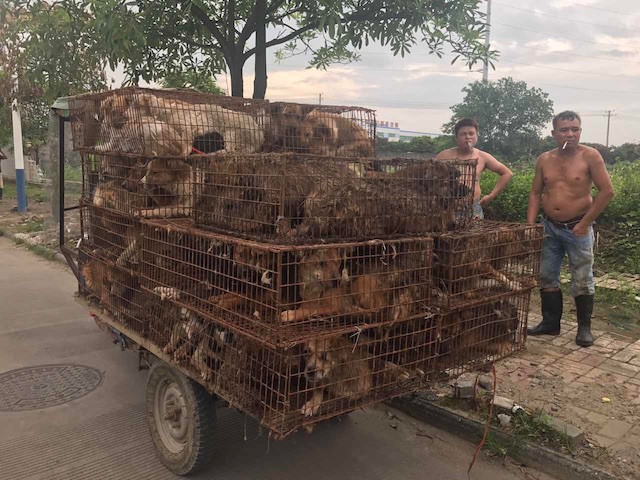 Dogs being transported to the Yulin Festival in 2017 (Courtesy Animal Hope and Wellness Foundation)