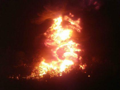 Monterrey Blaze