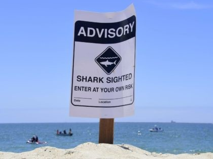 Shark attack notice Southern California (Frederic J. Brown / AFP / Getty)