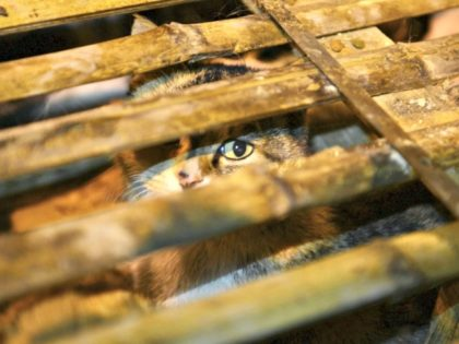 cat in cage Reuters via China Daily