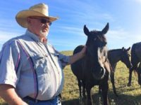 Rancher, Sheriff Clash over Seized Horses