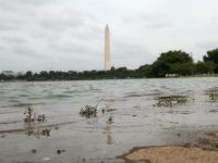 Washington monument flooding drain the swamp (Mark Wilson / Getty)