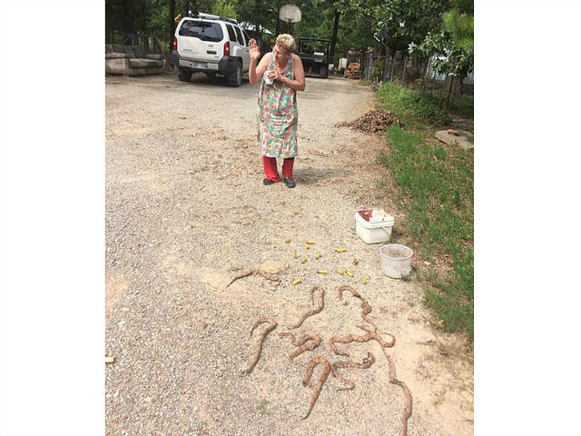 72-year-old Oklahoma woman kills 11 venomous snakes