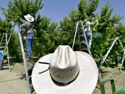 Farm Workers Damian Dovarganes AP