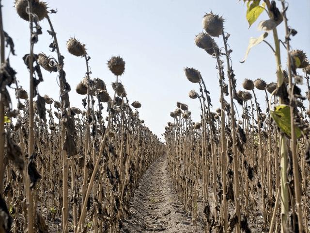 Drought / Crop Failure / heat wave