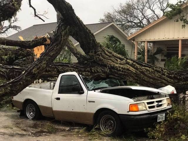 Tree on Car - Harvey