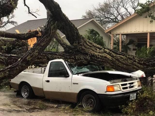 Tree on Car - Harvey