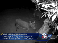 Man Sexually Molests Neighbor's Donkey