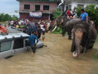 Elephants Deployed in Nepal to Rescue Flood Victims