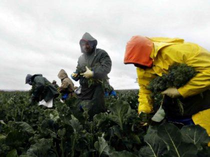 illegal fruit pickers MARCIO JOSE SANCHEZAP