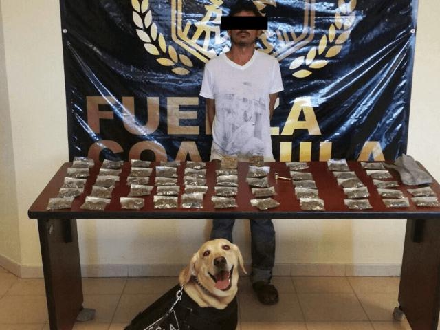 Coahuila Dog 1