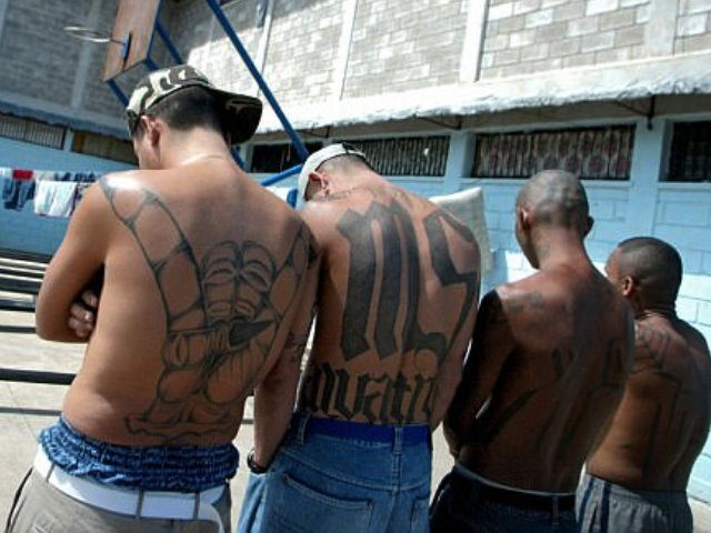 MS-13 - getty photo