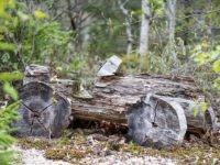 Stone Age car (Korona Lacasse / Wikimedia Commons)