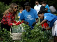WASHINGTON, DC - SEPTEMBER 22: U.S. first lady Melania Trump joins children from the Boys and Girls Club of Washington in planting and harvesting vegetables in the White House Kitchen Garden September 22, 2017 in Washington, DC. The White House Kitchen Garden is a tradition started by former first lady …