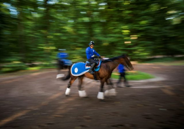 Japanese owned horse Satono Diamond takes part in a training session at Chantilly on September 6, 2017, ahead of the Prix de l'Arc de Triomphe