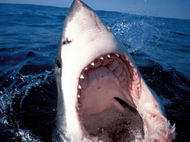 Two kids attacked by sharks off New York's Fire Island