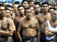 One-Third of 214 Arrested MS-13 Gangsters Were 'Unaccompanied Alien Children'