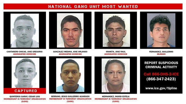 ICE touts arrests of alleged MS-13 gang members