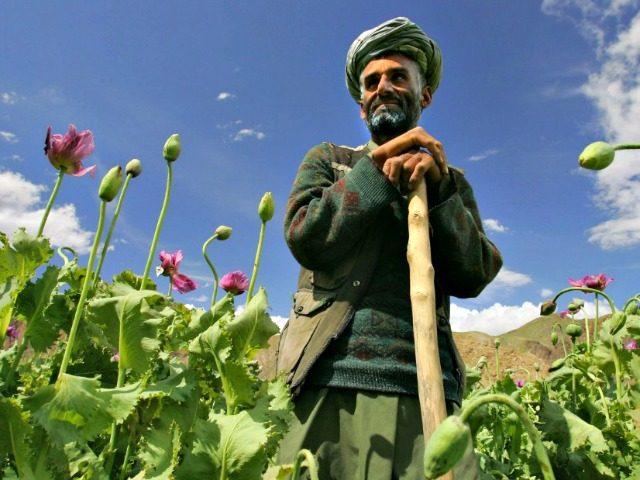 Afghanistan Poppy Farmer