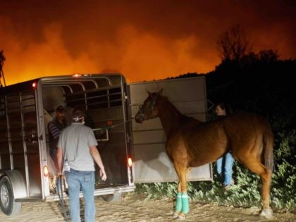 California fire thoroughbred horse (Sandy Huffier / AFP / Getty)