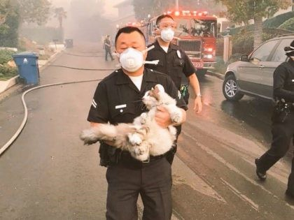 LAPD saving cat (@LAPDHQ / Twitter)