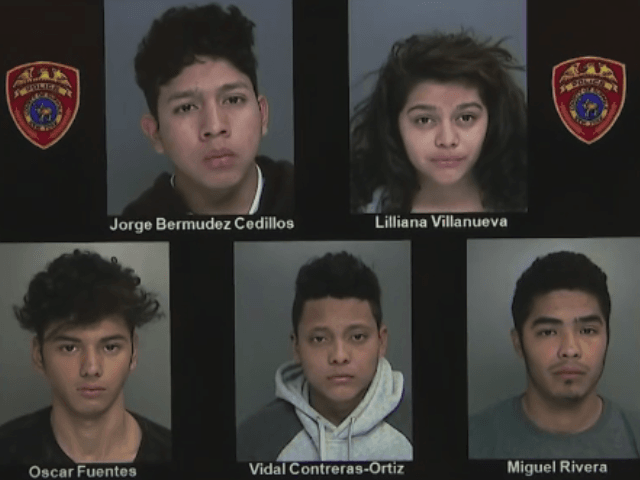 MS-13 Alleged Gang