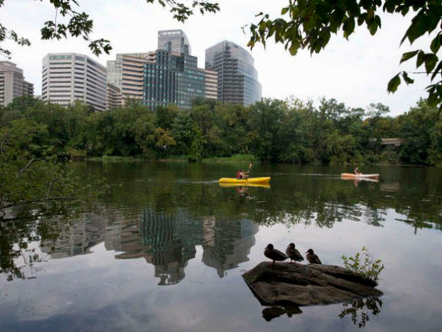 Kayakers paddle past the Rosslyn, Va., skyline, seen from Theodore Roosevelt Island in the Potomac River in Washington, Tuesday, Aug. 18, 2015. (AP Photo/Carolyn Kaster)