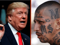 TRUMP: Deporting MS-13 Is Cheaper than Jailing Them