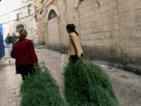 Unidentified women carry trees supplied by the municipality for Christmas in the Old City of Jerusalem Monday, Dec. 23, 2002. (AP Photo/Murad Sezer)