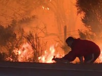 Man pulled over to save a wild rabbit from flames along Highway 1 in Southern California as the massive #ThomasFire spreads toward Santa Barbara County
