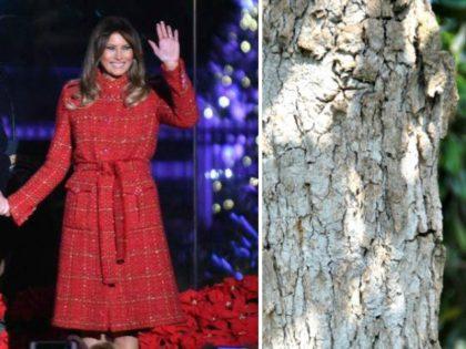 melania-trump and the magnolia