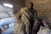 Making hay: Pape Samba Diane spent five years as a migrant worker in Italy -- now back in his native Senegal, he sees money-making potential from farming