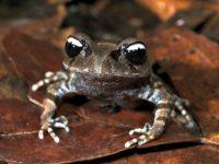 yin-yang-frog