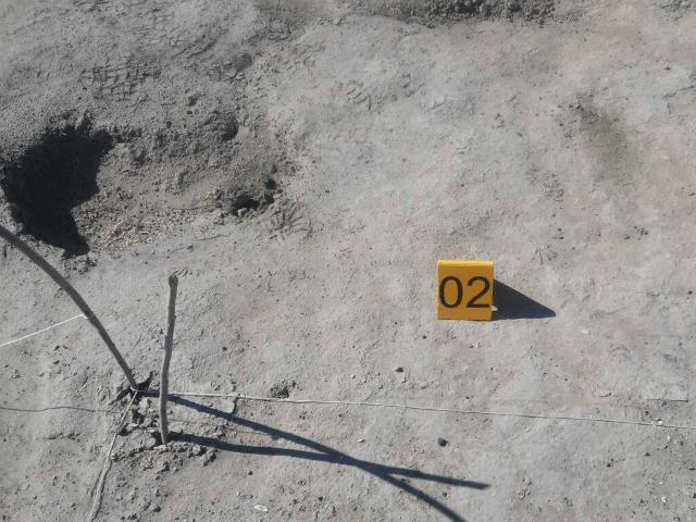Coahuila Mass Grave