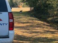 Texas Cops Capture Kangaroo After Hot Pursuit