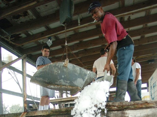 SHELL BEACH, LA - SEPTEMBER 29: A worker throws ice over crates of shrimp to be trucked throughout the U.S. at a factory September 29, 2004 in Shell Beach, Louisiana. Shrimpers from gulf states such as Louisiana, Texas, Alabama and Florida are facing increased difficulty surviving due to imported, farm …