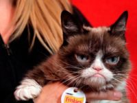 "The owners of meme ""Grumpy Cat"" won more than $700,000 in a lawsuit"
