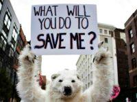 Polar Bear, Cold Weather