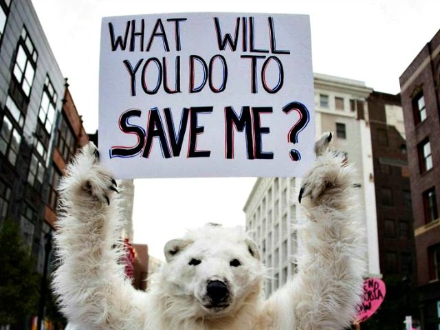 Polar Bear Protest