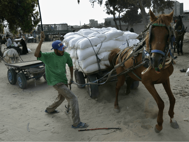 A Palestinian whips a horse carrying a cart loaded with sacks of flour at a United Nations food distribution center in the southern Gaza Strip town of Rafah Tuesday, July 11, 2006. Today, nearly 80 percent of Palestinians live below the poverty line on US$2 (euro1.57) or less a day, …
