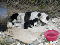 LEBANON-ANIMALS-RESCUE-SHELTER A rescued dog and its puppy are seen at a stray dog shelter in the town of Zahrani south of Beirut on October 24, 2017. Lebanese Hussein Hamza, 47, moved back from Germany to Lebanon to open his own flower shop and greenhouse but couldnt help but take care …