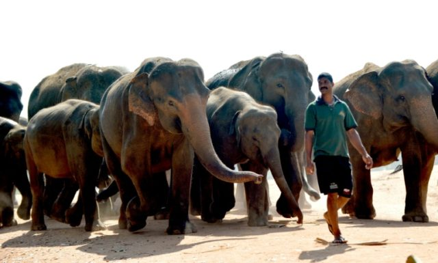 Sri Lanka police lose gun as elephants charge