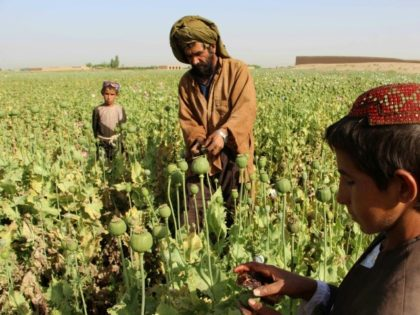 Afghan opium farmers: US officials say the Taliban and Haqqani groups collect money from the drug trade to finance attacks on Afghan and Coalition troops