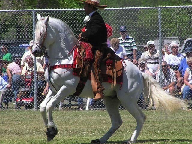 AztecaHorse - public domain
