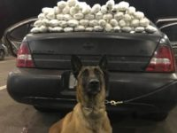 Border Patrol K-9 with Meth load