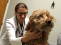 Dog with flu (Justin Sullivan / Getty)